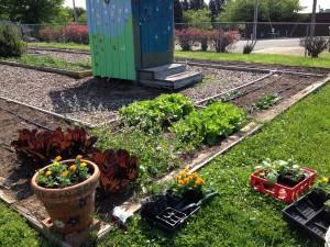 photo of garden for June newsletter 2015